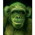 Rain Forest 3: Schimpanse