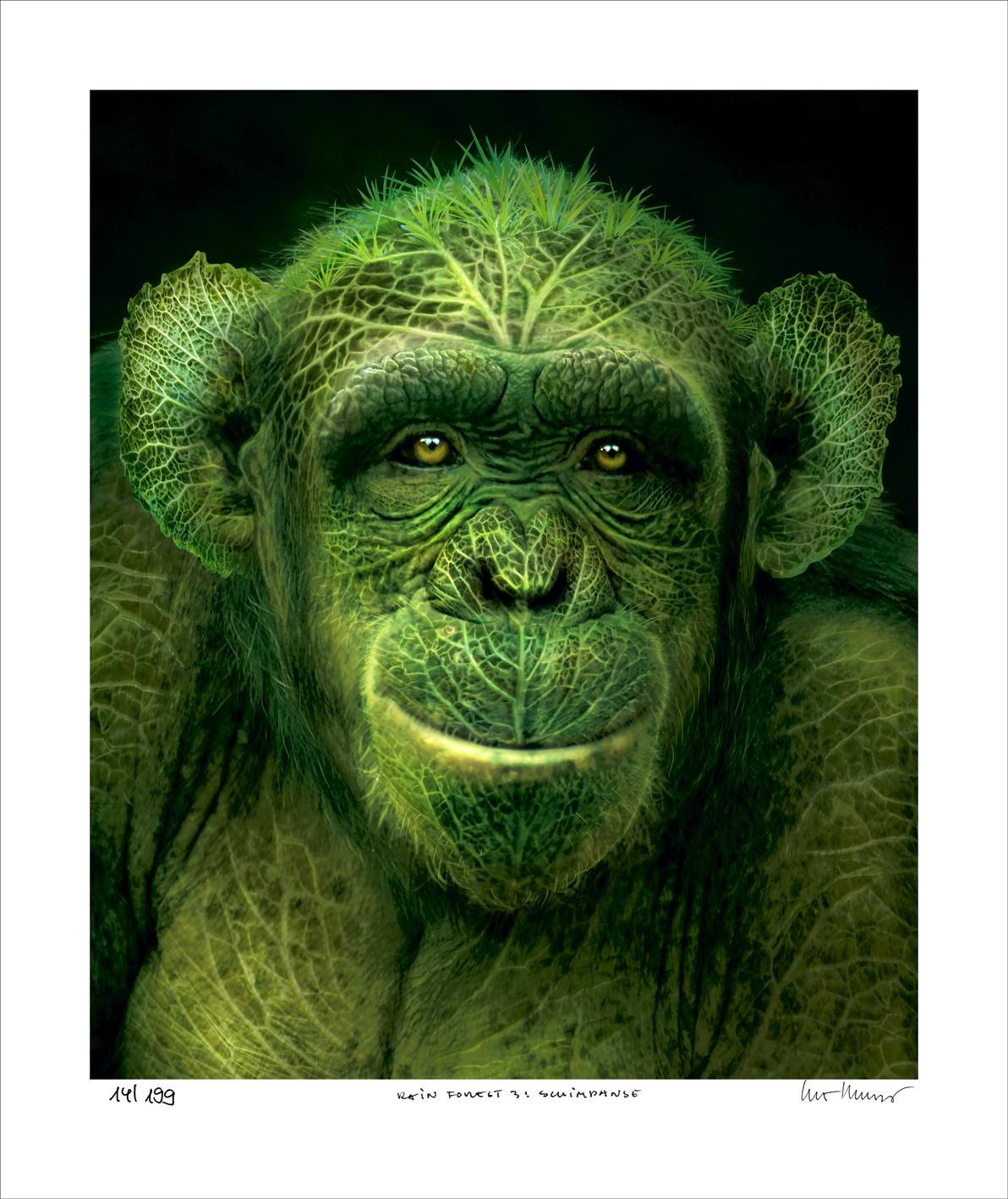"""Igor Morski: """"Rain Forest 1: Schimpanse"""", ungerahmtes Blatt, nummeriert, betitelt und handsigniert"""