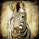 Das Zebra