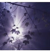 Klaus Ender: Licht im Dunkel. Komplettes Motiv.