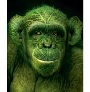 """Igor Morski: """"Rain Forest 1: Schimpanse"""", komplettes Motiv"""