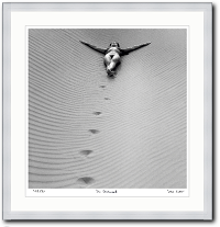 Im Duenensand von Fotograf Klaus Ender als Kunstdruck