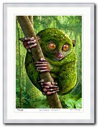 Igor Morski Rain Forest 1 Koboldmaki