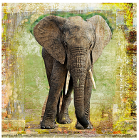 Der Elefant von Luz Graphic Studio kaufen
