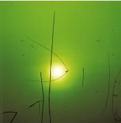Gräser im Licht