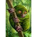 Rain Forest 1: Koboldmaki